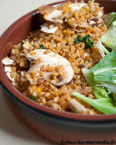 Salade de petit peautre aux champignons marmotte cuisine - Cuisiner le petit epeautre ...